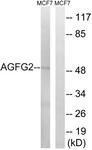 C16140-1 - AGFG2 / HRBL