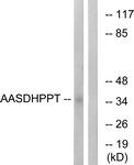 C16447-1 - AASDHPPT