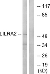 C16462-1 - CD85h / LILRA2