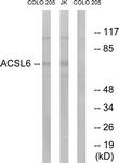 C16495-1 - ACSL6