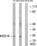 C16578-1 - MED18