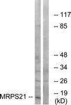 C16653-1 - MRPS21