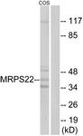 C16654-1 - MRPS22