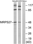 C16656-1 - MRPS27
