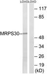 C16659-1 - MRPS30