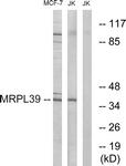 C16672-1 - MRPL39