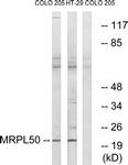 C16675-1 - MRPL50