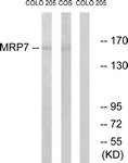 C16727-1 - ABCC10 /  MRP7