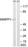 C16733-1 - MINPP1