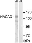 C16801-1 - NACAD