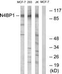 C16877-1 - N4BP1