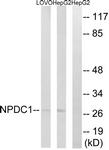 C16901-1 - NPDC1
