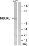 C16904-1 - NEURL