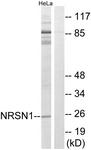 C16907-1 - Neurensin 1