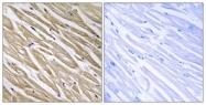 C17005-1 - Neuronal protein 3.1