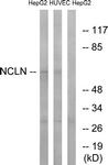 C17048-1 - Nicalin