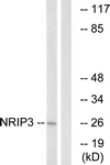 C17129-1 - NRIP3