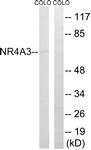 C17569-1 - NR4A3