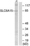 C17577-1 - SLC6A15 / NTT73