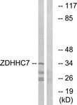 C17599-1 - ZDHHC7