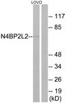 C17725-1 - N4BP2L2
