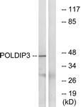 C17773-1 - POLDIP3 / SKAR