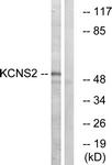 C17827-1 - KCNS2