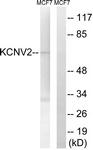 C17829-1 - KCNV2