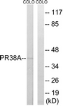 C17853-1 - PRPF38A