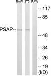 C17862-1 - PSAP
