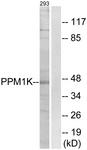 C18027-1 - Protein phosphatase 1K / PPM1K