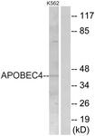 C18080-1 - APOBEC4