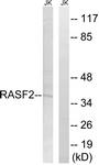 C18180-1 - RASSF2