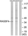 C18182-1 - RASSF4