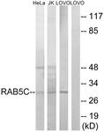 C18265-1 - RAB5C
