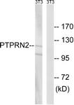 C18297-1 - PTPRN2
