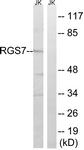 C18326-1 - RGS7