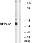 C18339-1 - RFPL4A / RNF210
