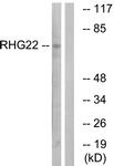 C18371-2 - ARHGAP22