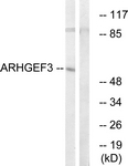 C18393-1 - ARHGEF3