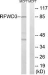C18442-1 - RFWD3 / RNF201
