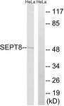 C18514-1 - Septin-8 (SEPT8)