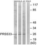 C18518-1 - PRSS33