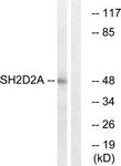 C18699-1 - SH2D2A