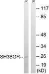 C18718-1 - SH3BGR