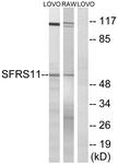 C18926-1 - SFRS11