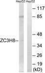C19576-1 - ZC3H8