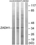 C19633-1 - ZADH1