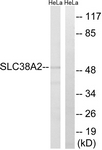 C20663-1 - SLC38A2