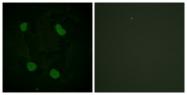 D0007-1 - Histone H3.1
